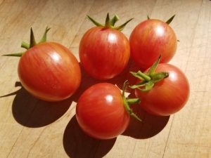 Pink Bumblebee Tomato | The Coeur d Alene Coop