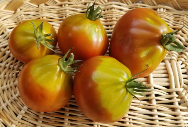 Japanese Black Trifele Heirloom tomato